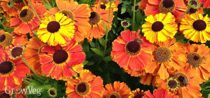 377 Best Companion Planting And Pollinators Images 400 x 300