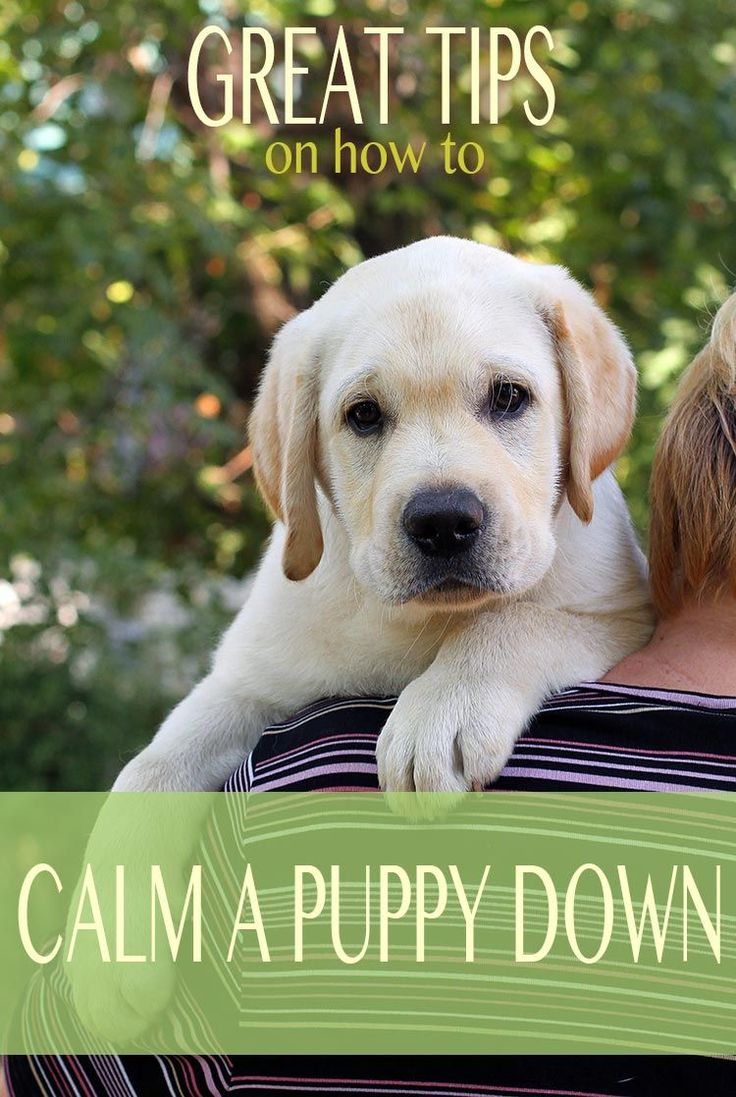 How to calm a puppy down from biting and reduce over excitement