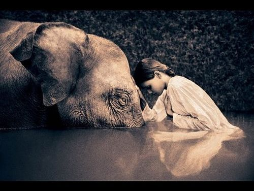 """One of my favorite images, ever.  The phrase """"namaste"""" always comes to mind."""