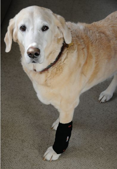 Canine lick sore granuloma from injury