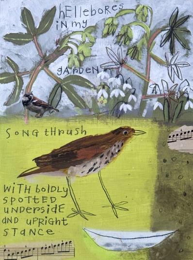 Elaine Pamphilon: Song Thrush