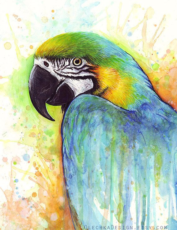 Hey, I found this really awesome Etsy listing at https://www.etsy.com/listing/188547298/colorful-parrot-bird-watercolor-painting