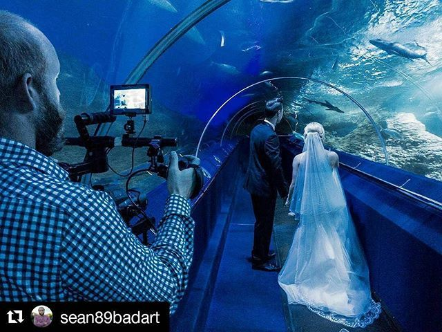 Aquarium of Western Australia. I love my job! Today's #wedding is at #aqwa. No words can explain how excited I was too shoot here  #c100 #roninM #whiteboxstudio pic by @dsipictures  #Repost @sean89badart with @repostapp