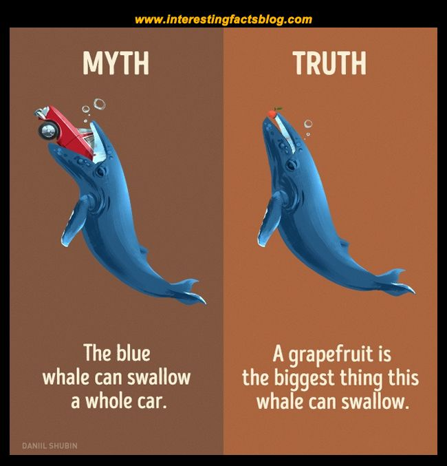 Myths About Whales