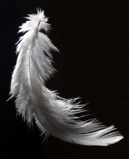 feather to biodegradable plastic