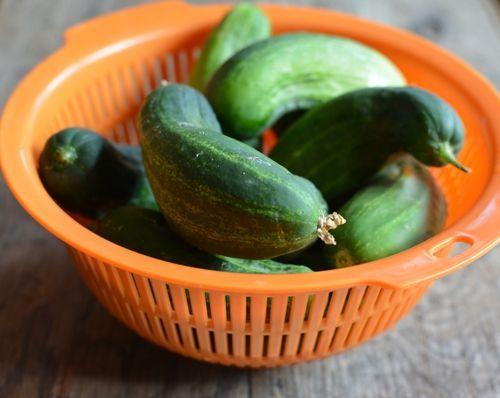 Pickling-cucumber-stem-blossom