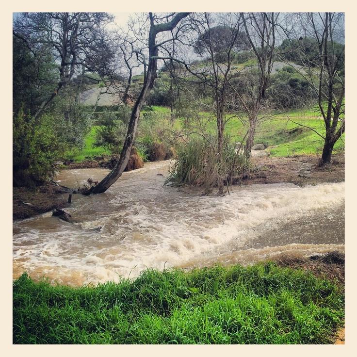 River in Stellenbosch