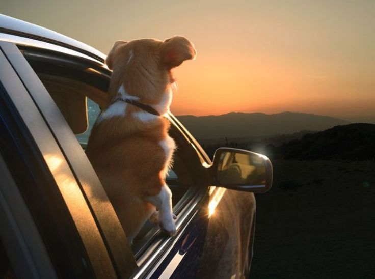 Haha, 'Dogs in Cars' is literally the BEST thing ever. Click to be amazed. #awesome #spon