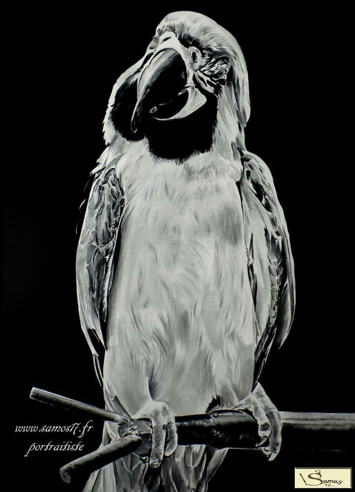 Ara perroquet du zoo de l palmyre  @ara @painting #art #perroquet #portraitiste