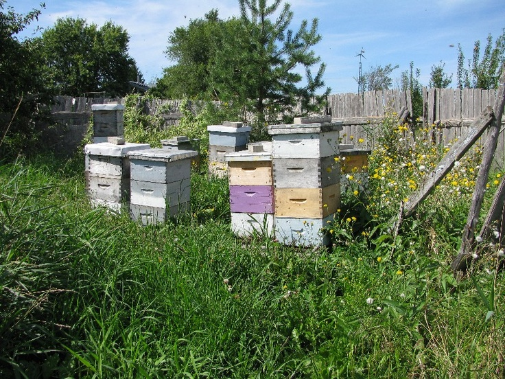 Ferme Dagenais et Le Tournesol in Embrun, Ontario  FANTASTIC honey, and example of biodynamic agricultural practices. I love that that their hens are fed spouted feed! We are truly blessed to know such hard working people in argriculture, with a bounty of knowledge to share.
