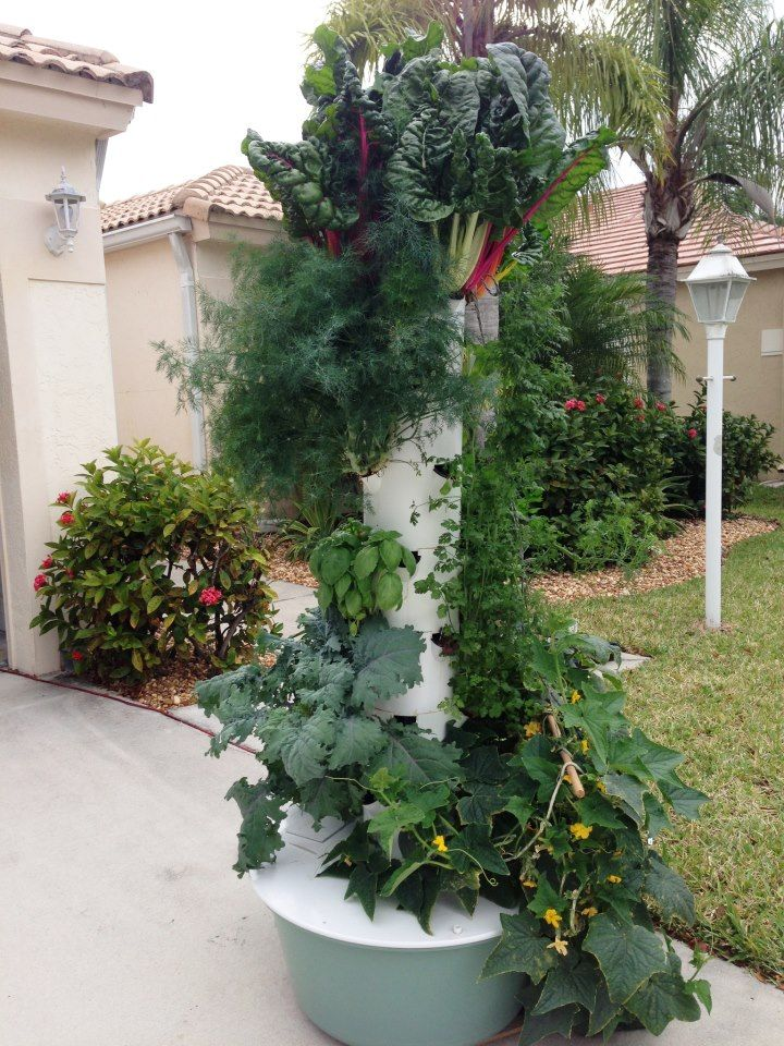 140 best Juice Plus and Tower Garden images on Pinterest | Tower ...