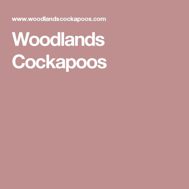 Woodlands Cockapoos