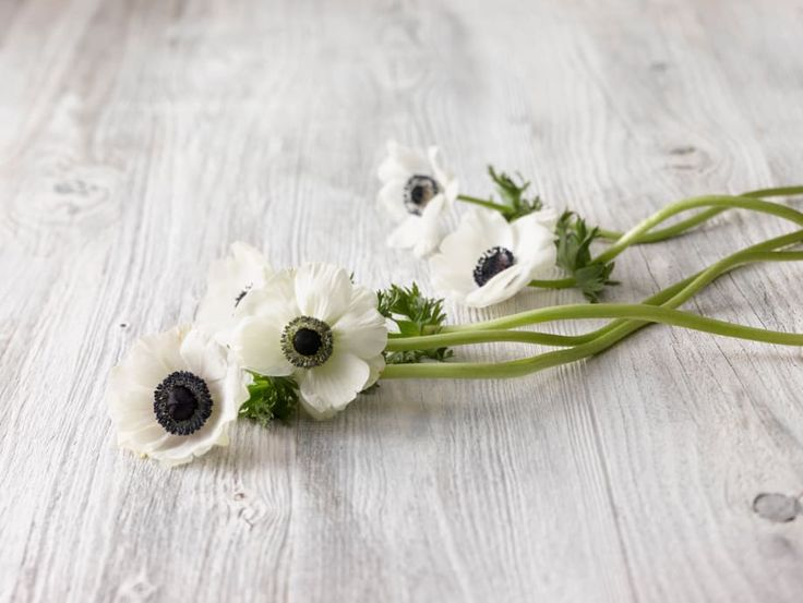 flor-anêmona