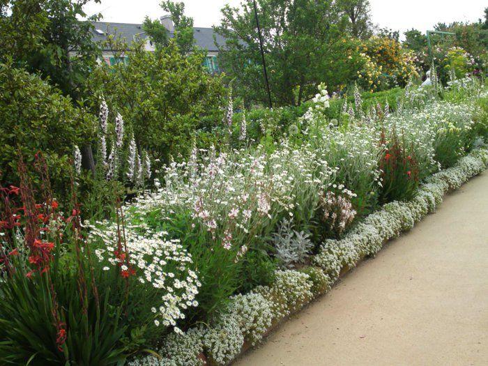 Les 48 meilleures images du tableau id es jardin sur pinterest astuce jardin permaculture et - Haie fleurie toute l annee ...