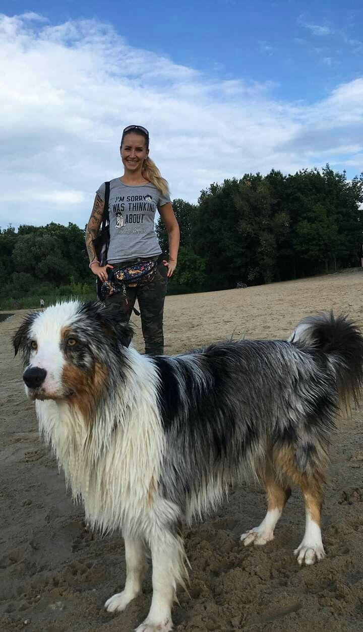 Australian Shepherd | Australian shepherd, Lab dogs