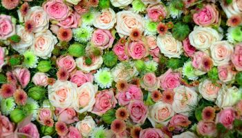 A Full List Of Flowers You Will Need For Your Wedding