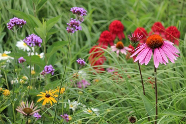 Found On Bing From Pinterest Com Native Plants Plants Native