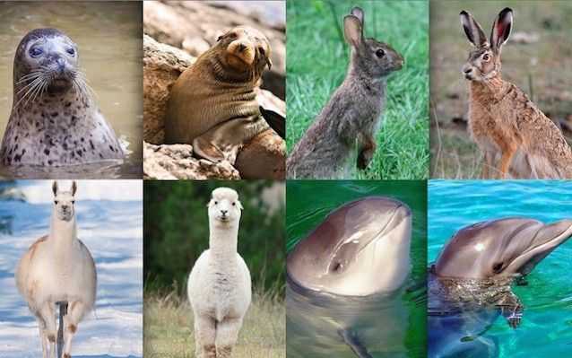 28 commonly confused animals. What's the difference? Sometimes similar creatures from the same order get categorized differently because of habitat or behavior. Other times animals from completely different species evolve in similar ways. Whatever the reasons, at times it's hard to know the difference between them. Here are our favorite pairs of confoundingly confusing critters and how to tell the difference.