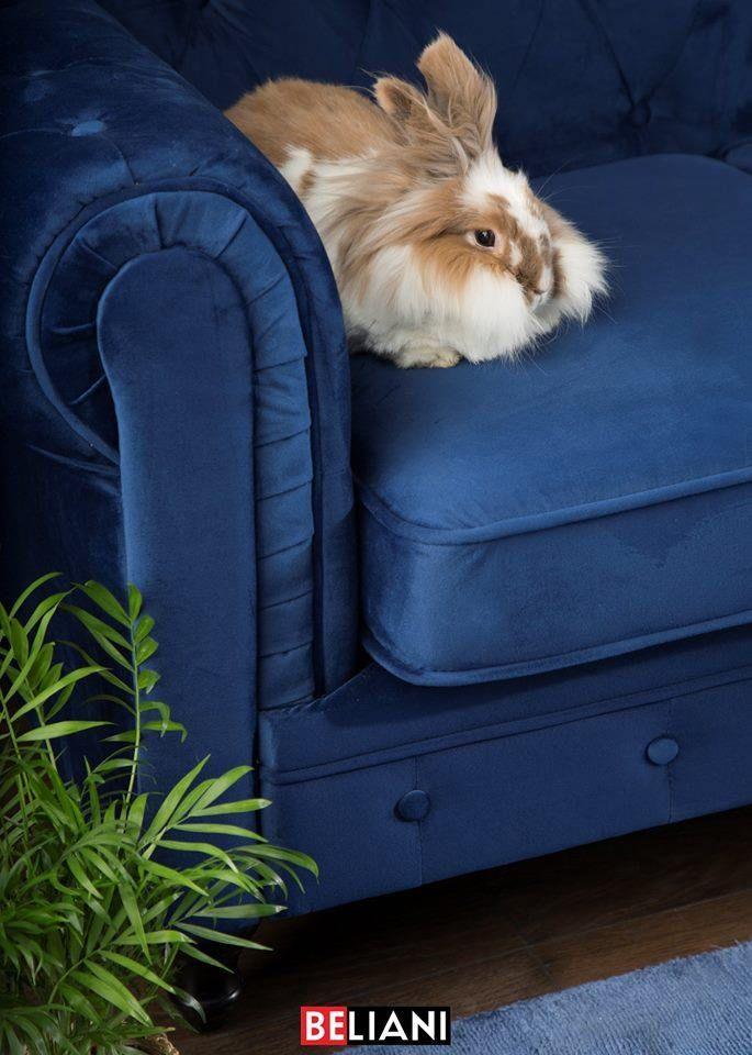 Divano Vintage A 3 Posti In Tessuto Blu Scuro Chesterfield Color Of The Year Decor Home Decor