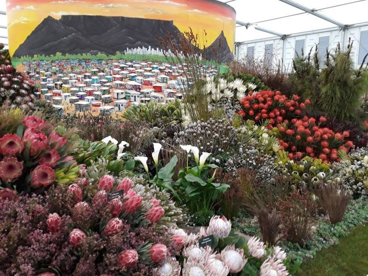 It's GOLD for South Africa at the Chelsea Flower Show in London. #ChelseaFlowerShow