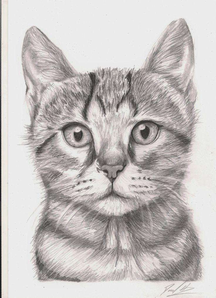 Scaredy Hare Pencil A4 Zeichnen Katzen A4 Hare Katzen Pencil Scaredy Zeichnen Katze Zeichnen Zeichnung Katzen Zeichnungen