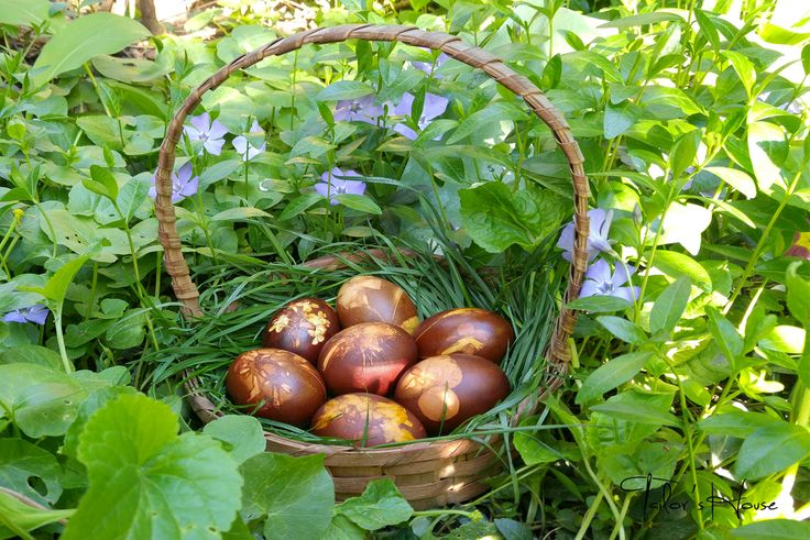 oua vopsite natural cu coji de ceapa