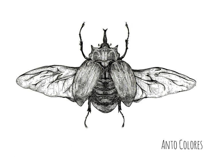 #beetle #escarabajos #illustration #ilustracion #antocolores  www.instagram.com/anto.colores https://www.facebook.com/AntoColores/?ref=aymt_homepage_panel