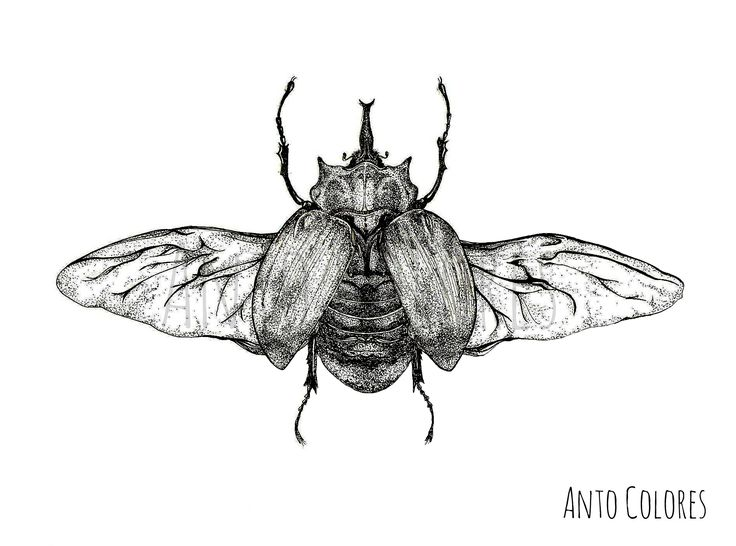 #beetle #escarabajos #illustration #ilustracion #antocolores  www.instagram.com/anto.colores https://www.facebook.com/AntoColores/?ref=aymt_homepage_panel