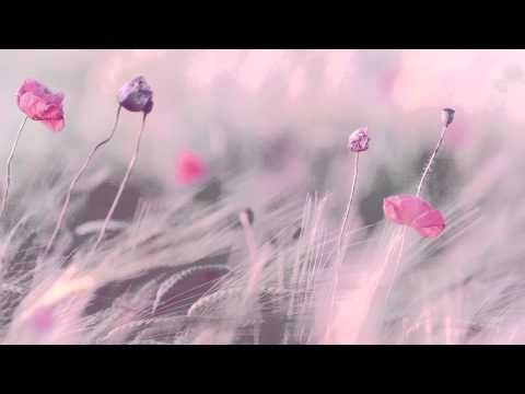 3 HOURS Relax BRAVEHEART Theme Instrumental Soundtrack | Chinese Flute + Piano | Background Music - YouTube