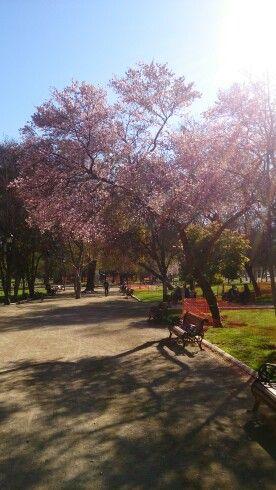 Parque Forestal.Santiago Chile