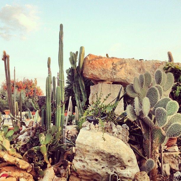 Desert Wandering   @invokethespirit