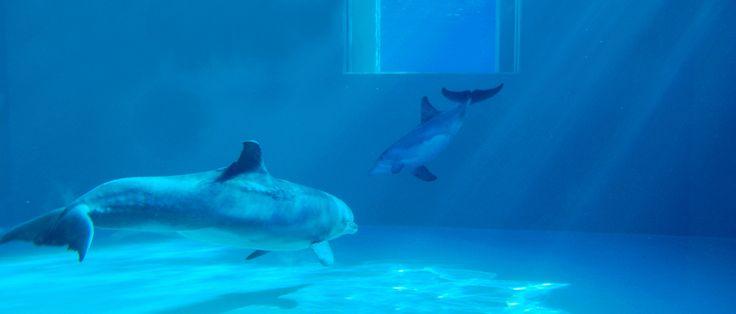 Dolphins at Clearwater Marine Aquarium
