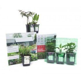 De planten van de Natural Garden Collection kun je planten volgens het meegeleverde beplantingsschema, maar je kunt ze ook naar eigen inzicht planten.