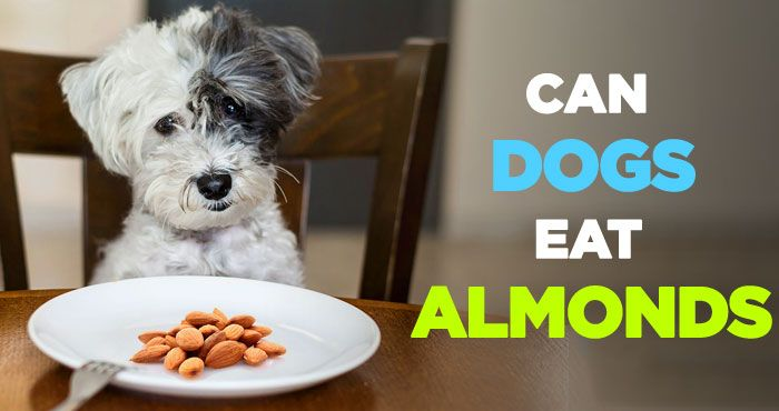 Can Dogs Eat Almonds: And Can Dogs Eat Almond Butter Everyday? http://peanutpaws.com/can-dogs-eat-almonds/  #almond #almondbutter #health #dog #dogfood #dogcare #dogs #pets #petcare #nutrition