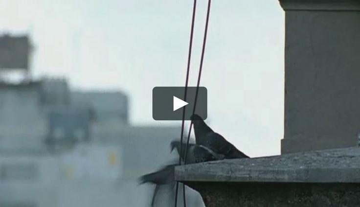 """Este es """"Mazinger - Madre Buenos Aires - Banco Hipotecario."""" de Agustin De Vittorio en Vimeo; el punto de encuentro entre los videos de alta calidad y…"""