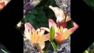 Sandra Foster - YouTube
