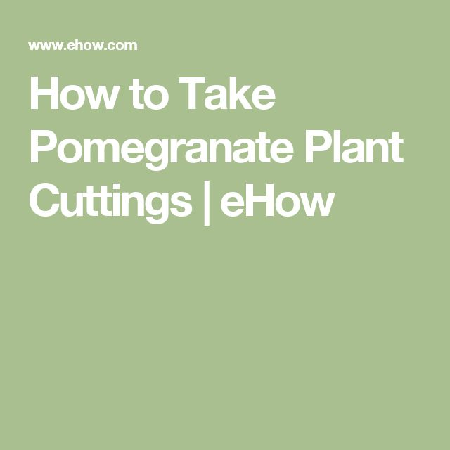 How to Take Pomegranate Plant Cuttings | eHow