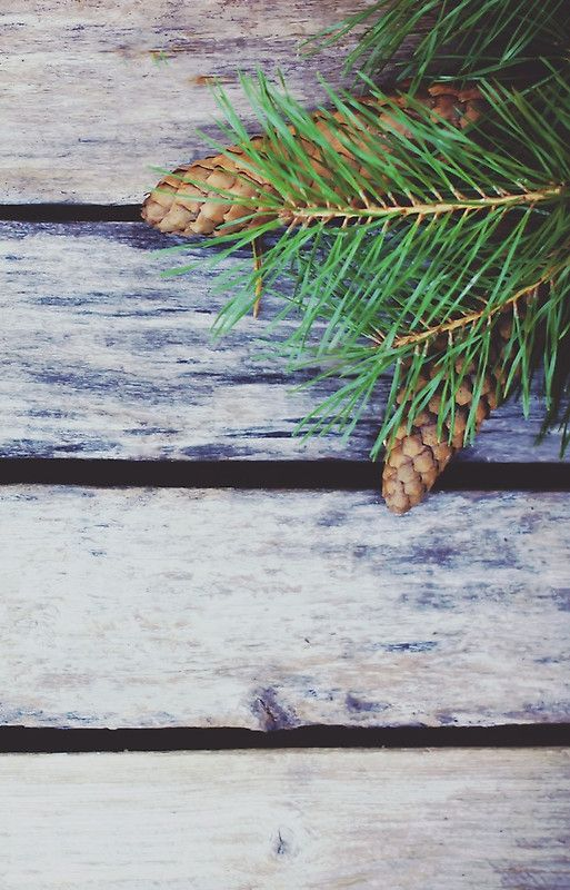 Green pine branch composition