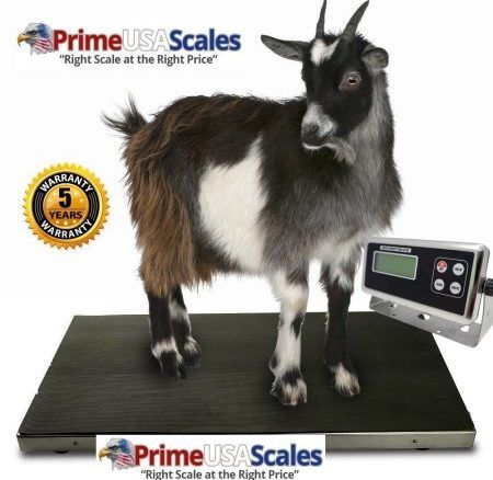 OP-922 is a heavy duty durable vet scale weighing small to medium sized animals with animal weighing and peak hold functions. Features: Size: 43″ x 20″ x 2″ Mild steel frame 304 stainless steel platter 4 aluminum full bridge load cells Anti-slip rubber mat Quick indicator dis-connector LCD Indicator Peak hold function for animal weighing