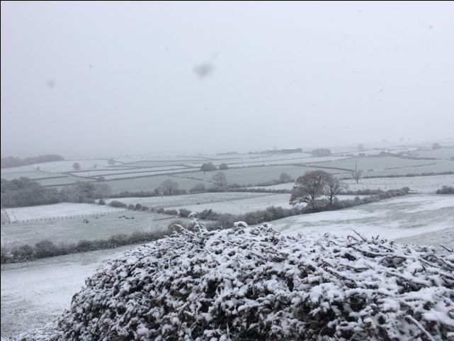 This morning I woke up to my very own winter wonderland! (Photo by Alison Chambers)