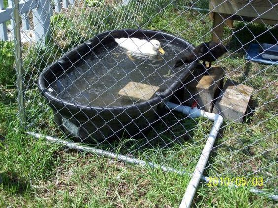 """Rubbermaid stock tank as duck """"pond."""" Use a 1-1/4"""" male threaded adapter on the 1-1/4"""" threaded drain, along with a length of 1-1/4"""" PVC pipe and a 1-1/4"""" ball valve to drain."""