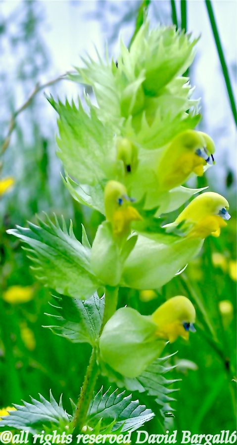 Flowers that look like birds