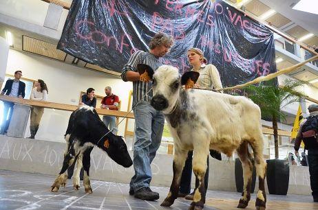 Non à la ferme aux 1000 vaches : les opposants mènent une opération coup de poing près de Lille / France Bleu