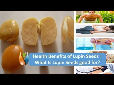 Health Benefits of Lupin Seeds   What Is Lupin Seeds good for