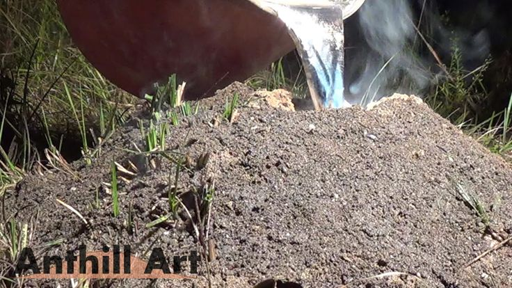 10 Best Ant Colony Casting Videos Images On Pinterest -6373