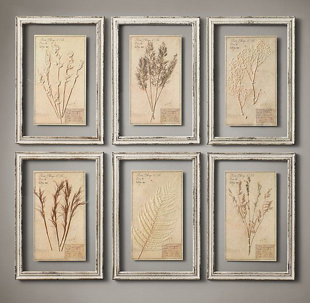 "Restoration Hardware - 19th C. Framed Herbariums Ivory (Set of 6) $595 Our framed herbarium boards – each one unique – display the organic beauty of genuine botanical specimens from the 19th century. Mounted on paper, each is labeled and framed between two panes of glass.     Herbarium, approx.:13½""W x 19½""H     Frame: 15¾""W x 22¾""H overall"