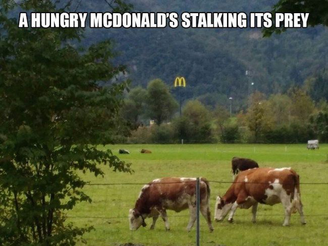 except McDonalds doesn't use real meat. It's all the fake pink meat
