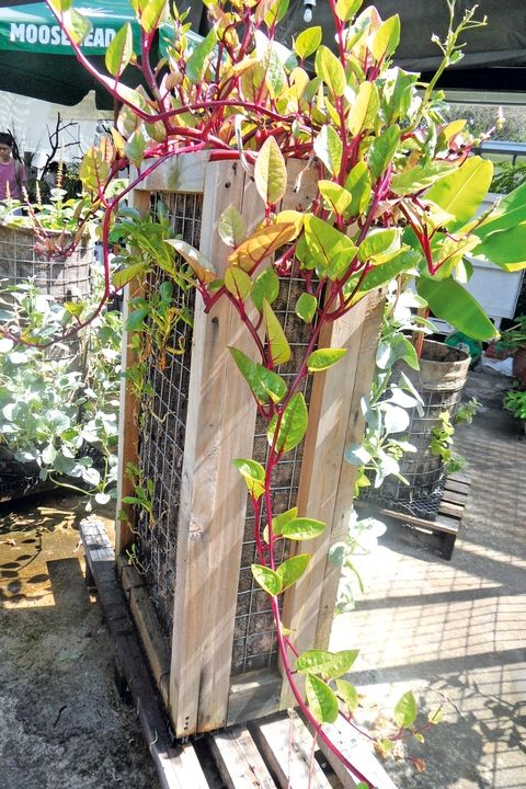 Vertical gardening in Singapore: Green options for a balcony or small living space - Expat Living Singapore