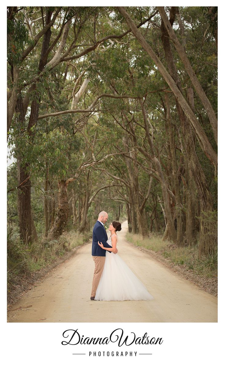 Love beautiful treelined driveways especially out in the Bush. Sylvan Glen Country House. Dianna Watson Photography