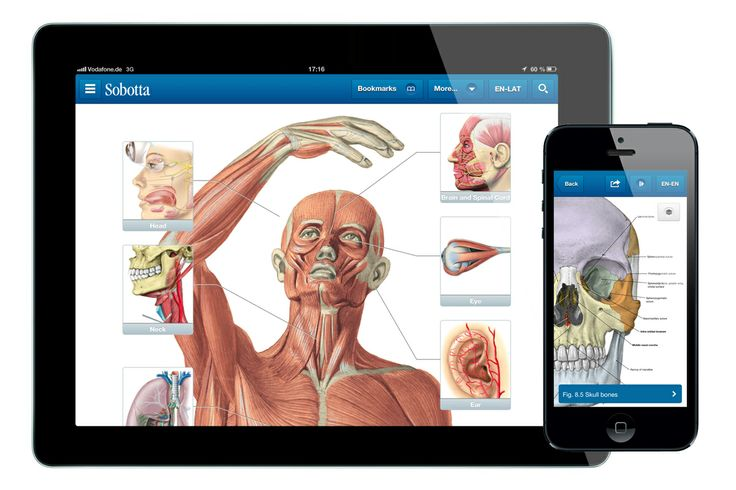 10 best Anatomy App images on Pinterest | Anatomy, Anatomy reference ...